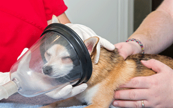 Veterinary Surgery For Pets in Chandler AZ